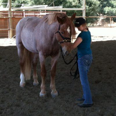 Equine coaching
