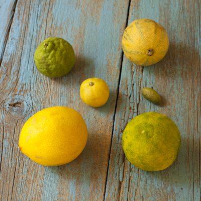 Citrus overview
